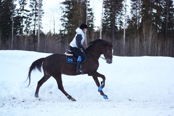 renskinn pad häst