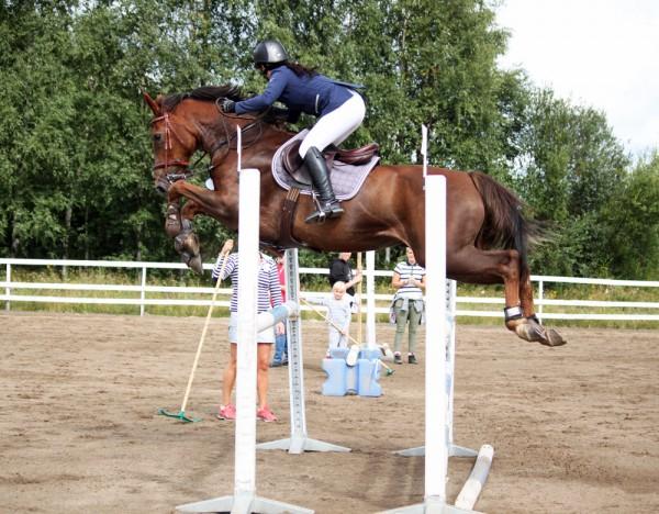 hästar som hoppar